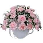 Pink minis carnations