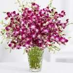 Deluxe Purple Dendrobium Orchids