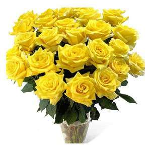 Finest golden colour roses